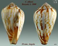 Conus allaryi