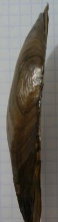 PA240034.JPG