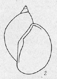 persica.jpg